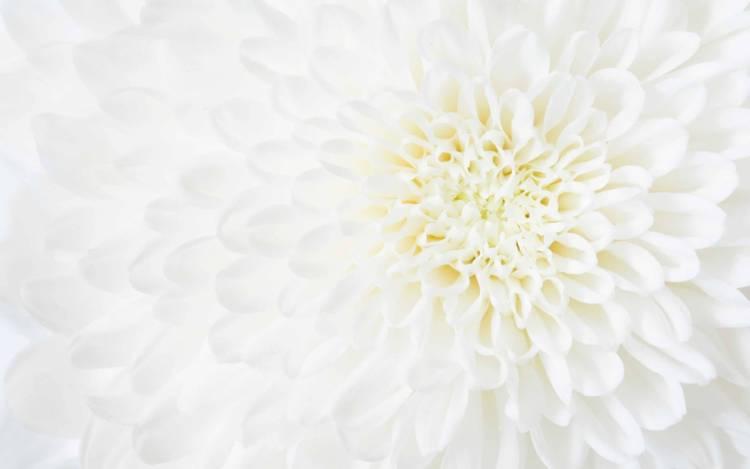 台風 24 号のお見舞いの花