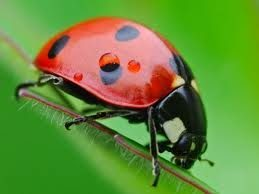 Resultado de imagen para insecto