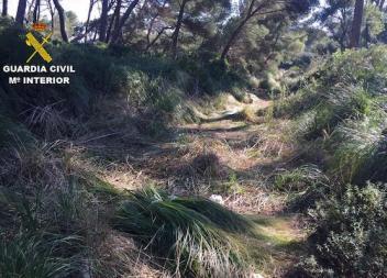 Denunciades sis persones a Capdepera per tallar plantes en un espai protegit