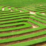 grass lawn cut into a maze