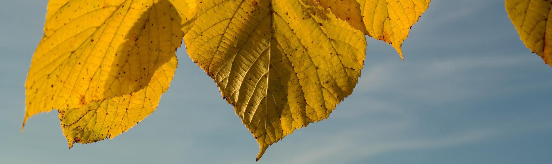 Stichting de Gele Linde