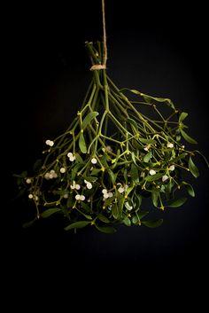 plantenverhalen