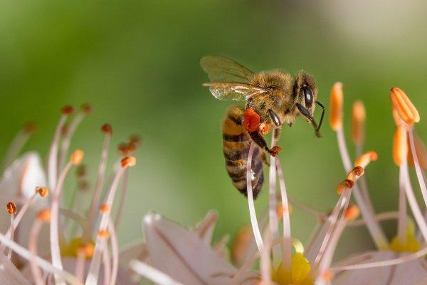 Bienen im Heidebad