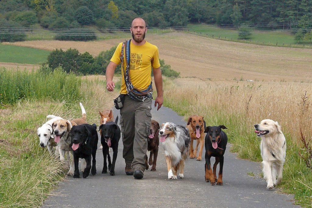 Lustige Hunde Hundeschule Home Facebook
