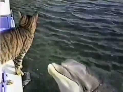 delphin und katze spielen zusamm