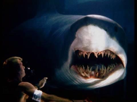 weisser hai bleibt im kaefig ste