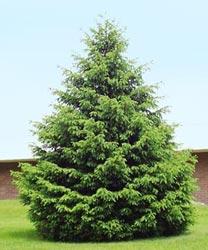 Un árbol de Navidad en el jardín