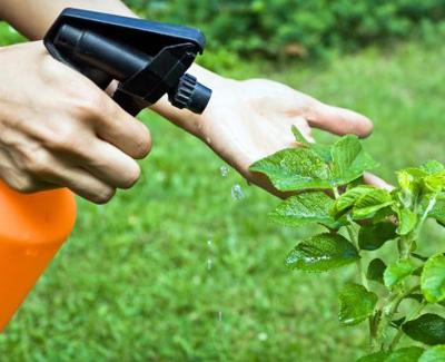 EL control de plagas en la jardinería