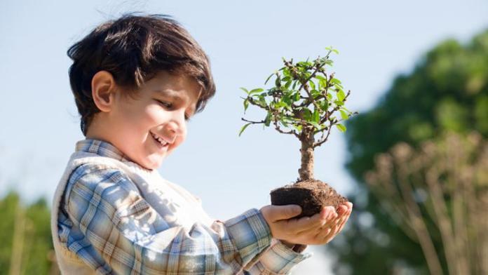 Incentivar a tu hijo a plantar un árbol