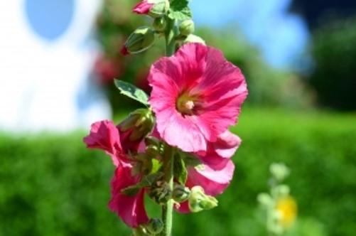 fertilizantes naturales