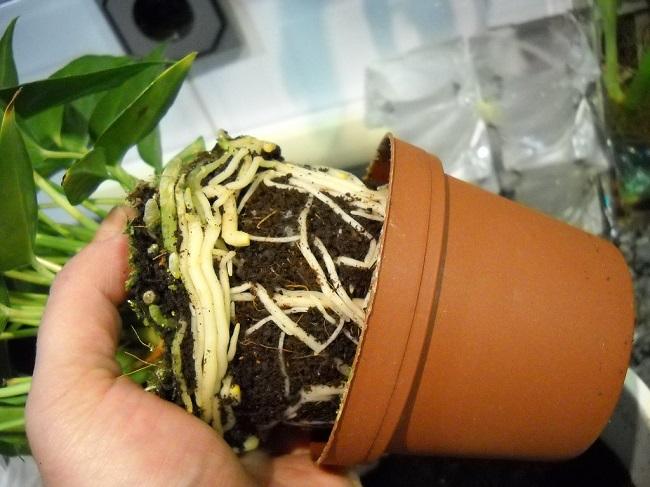 Plantar y trasplantar plantas