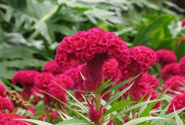 Flores ideales para climas cálidos