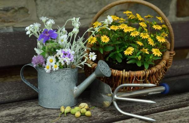 decorar_con_plantas