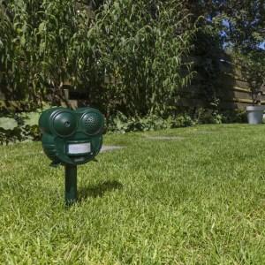 909 Outdoor Honden-