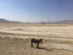 lonely-donkey_bearbeitet-1