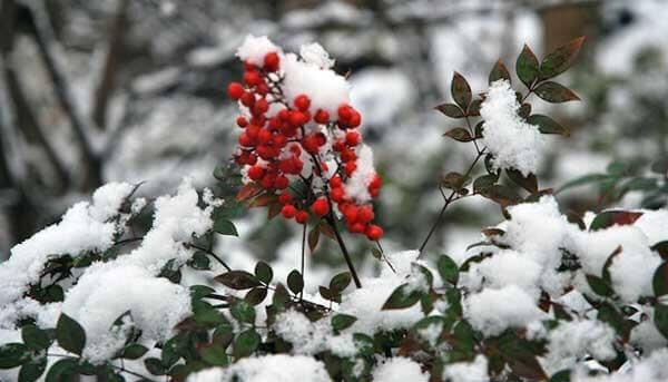 kış bahçesi fikirleri