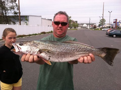 weakfish from the Delaware Bay