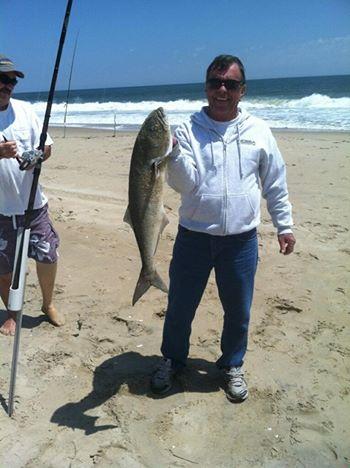bluefish, south bethany beach drive on access, surf fishing, atalantic ocean fish, migratory fish, predatory fish, gator blues,