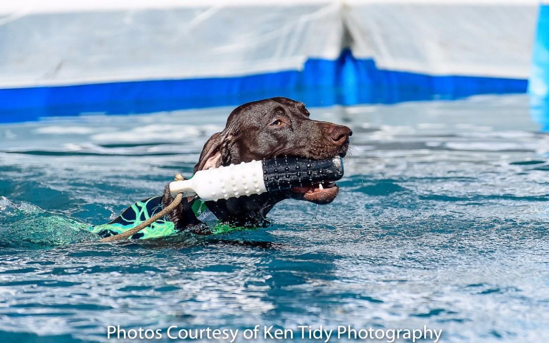 dock dogs, delmarva outdoors expo, kent county, harrington, fairgrounds, retriever dogs,