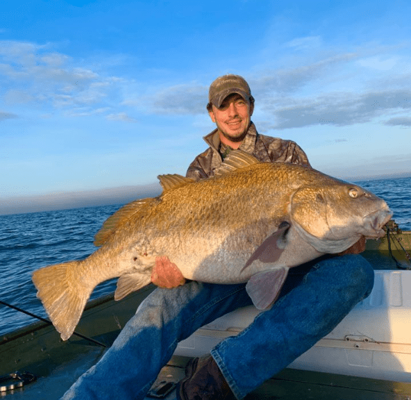 black drum, delaware bay, delaware surf fishing, sussex county, drum fishing