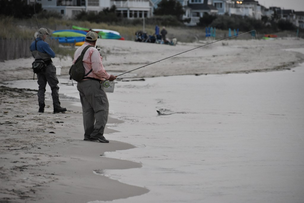 saltwater fly anglers of delaware, fly fishing, cape henlopen state park, lewes, delaware, sussex county, wizards of the long wand, the flats, yes you can fly fish in the ocean,