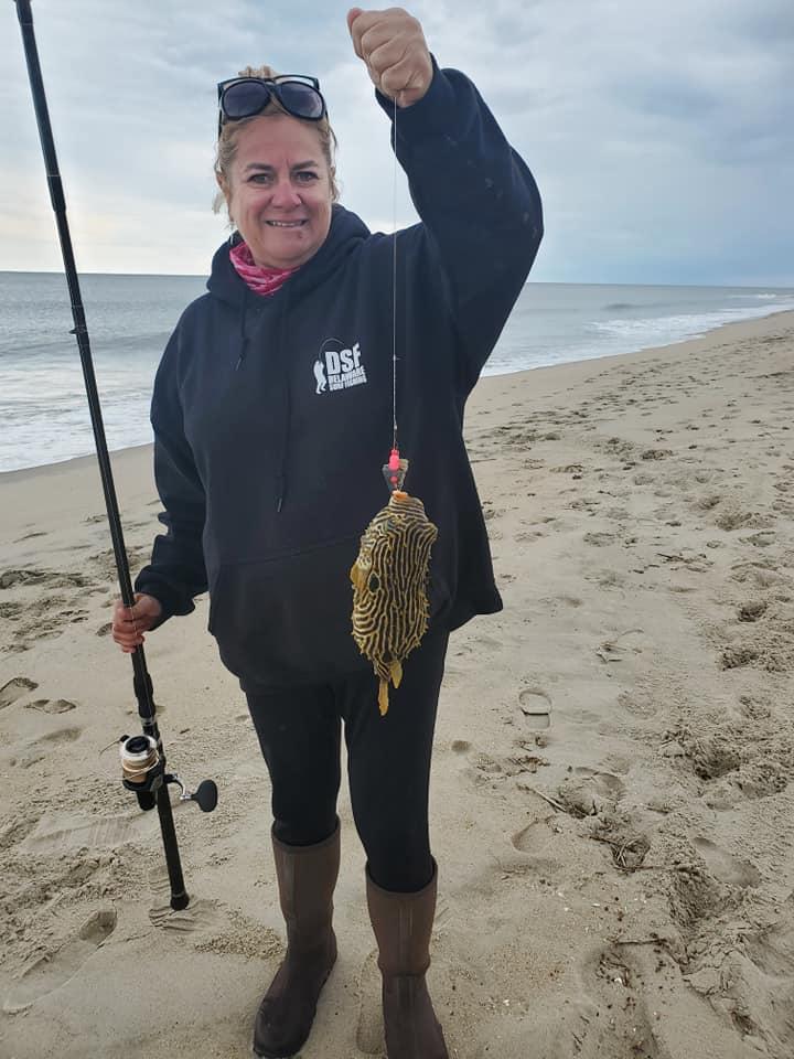 delaware surf fishing, burr fish,