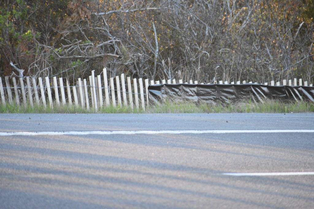 terrapin fence, route 1, diamond back terrapin hunting season