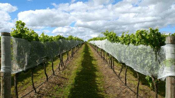 Award Winning Queensland Wine Summit Estate