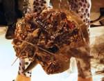 Mushroom Bags at Cydelic by Choryin