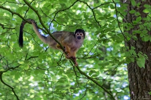 Gekleurde aap