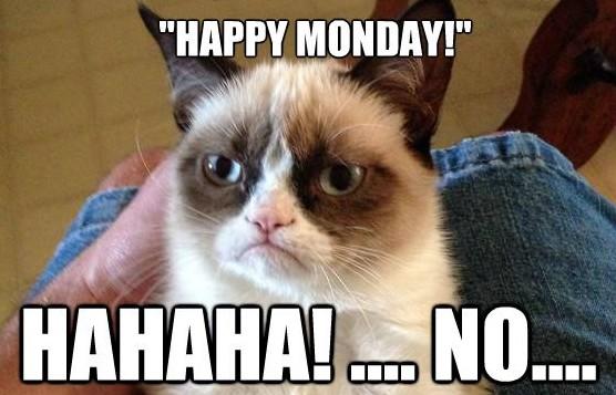 Grumpy-Cat---Happy-Monday-----NO