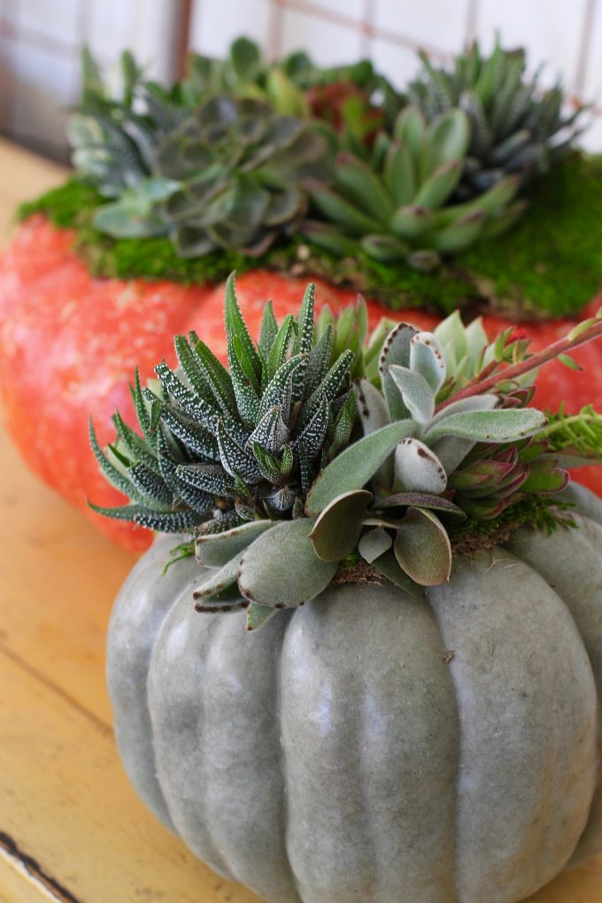 Fall Succulent Topped Pumpkin Centerpieces