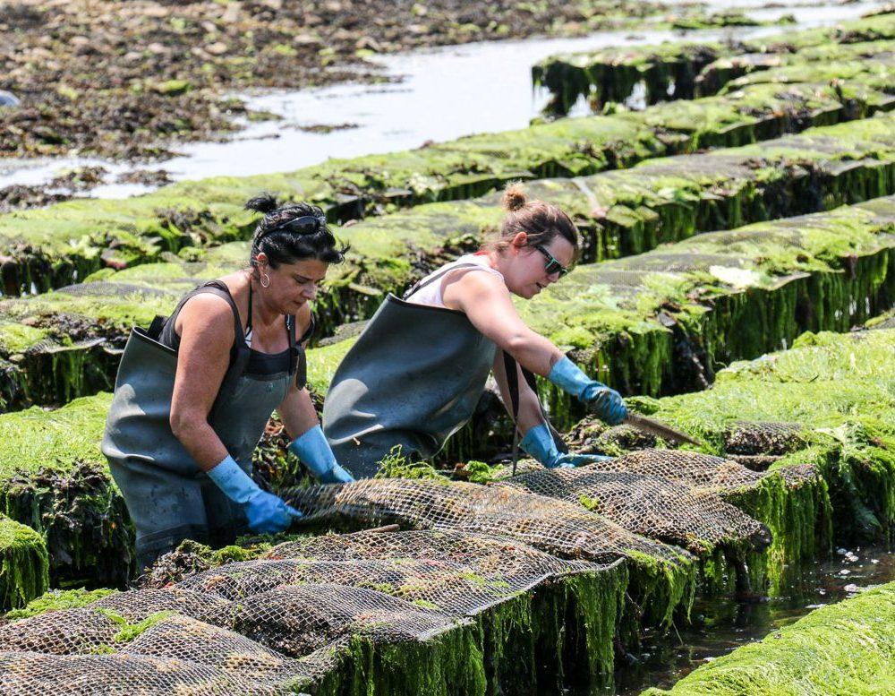 Der Austernfischer im Golf von Morbihan