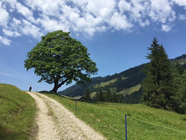 Balderschwanger Tal