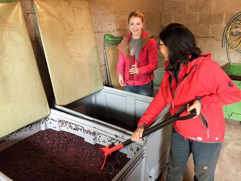 Maische untertauchen bei Katja im Weingut Königsrain