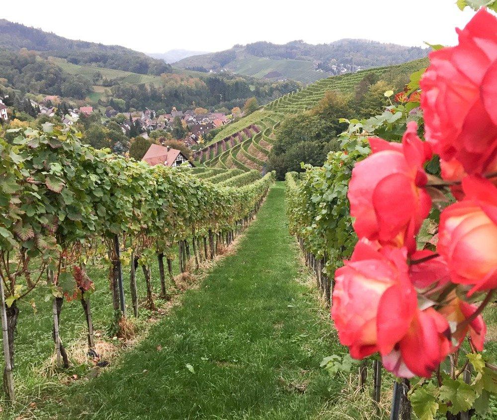 Sasbachwalden, das Schwarzwälder Weindorf (Teil 1)