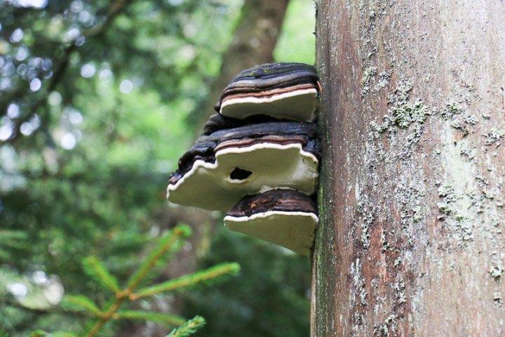 Pilze und ...
