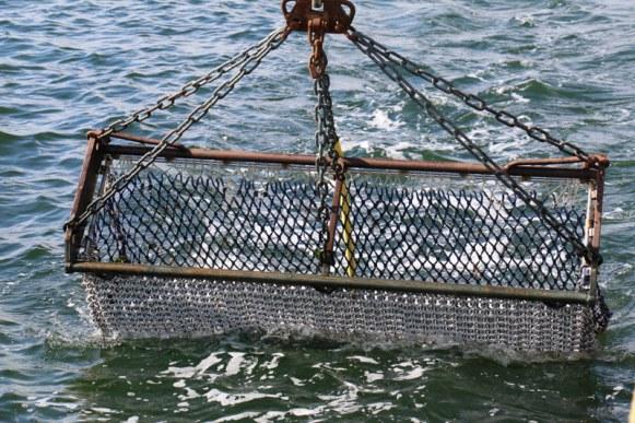 zeeland-muscheln-9