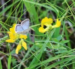 Schmetterling