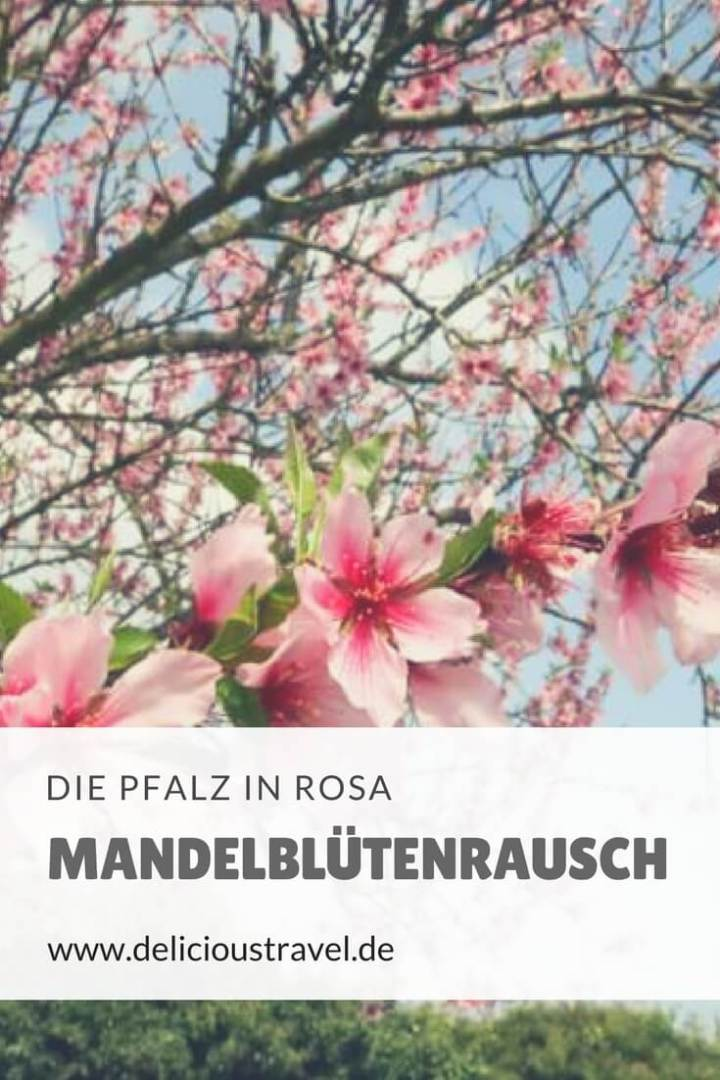 Ein rundum genussvolles Wochenende: Mandelölmassage, Mandelmenü, mit dem Oldtimerbus durch die Allee voller Mandelblüten, Wandern, Yoga und Relaxen in der Südpfalztherme. #mandelblüte #pfalz #frühling #natur