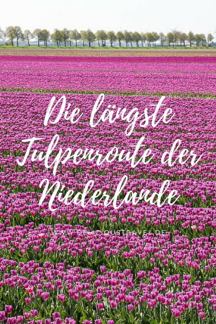 Tulpenroute Flevoland #ichliebetulpen #thisisholland #toerismeflevoland #tulpenpromotienederland