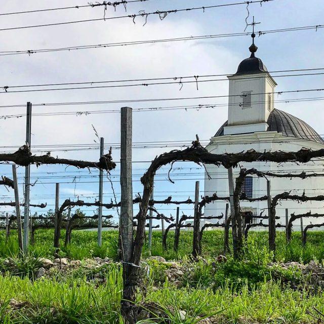 3 Weinregionen in Ungarn, die du kennen solltest