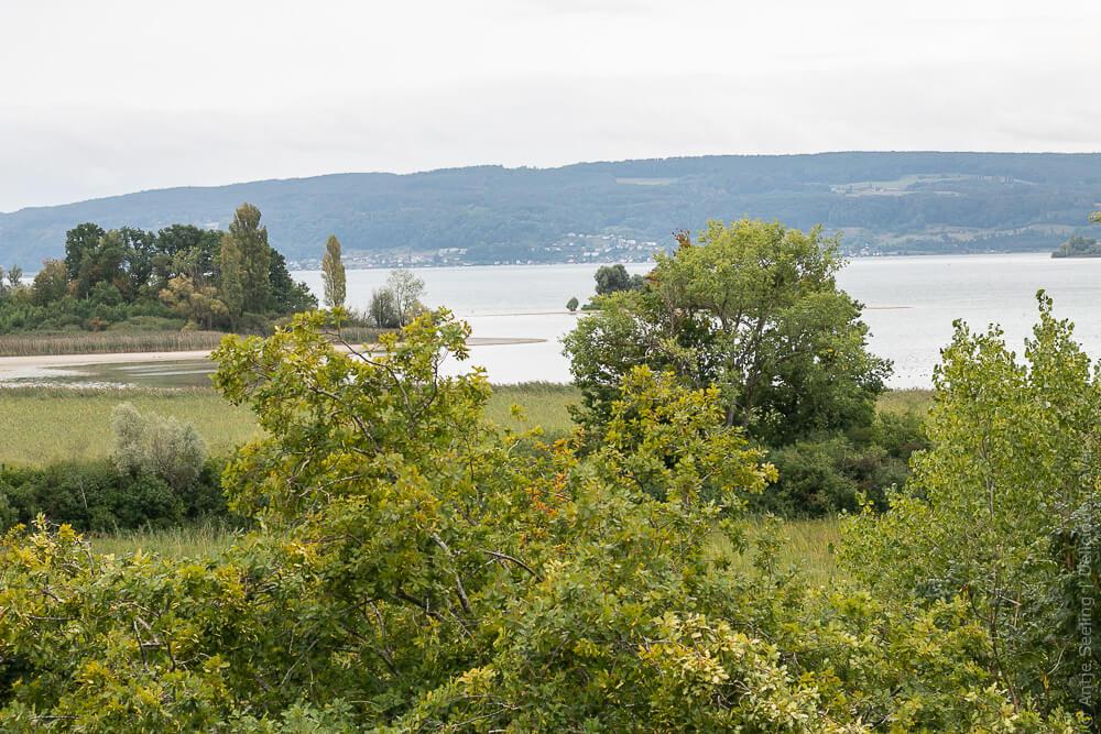 Die Liebesinsel (versteckt inter dem großen Baum rechts) im Bodensee