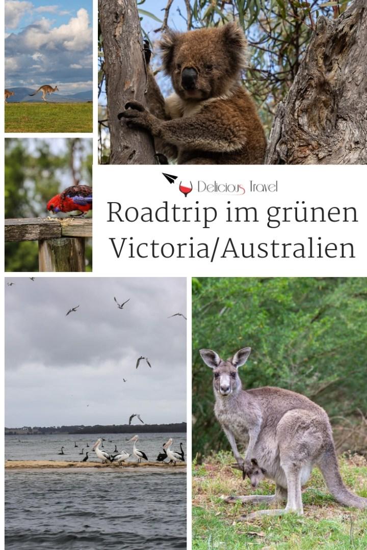 Australien Rundreise planen: Genussreisetipps für Victoria #australien #victoria #roadtrip