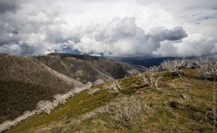 Aussicht auf der Great Alpine Road, Australlien