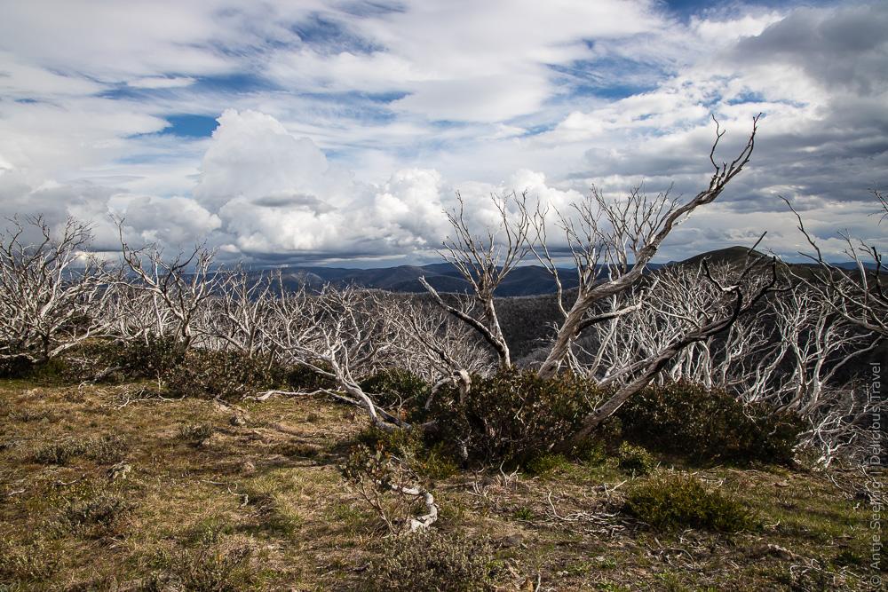 Great Alpine Road, Australien