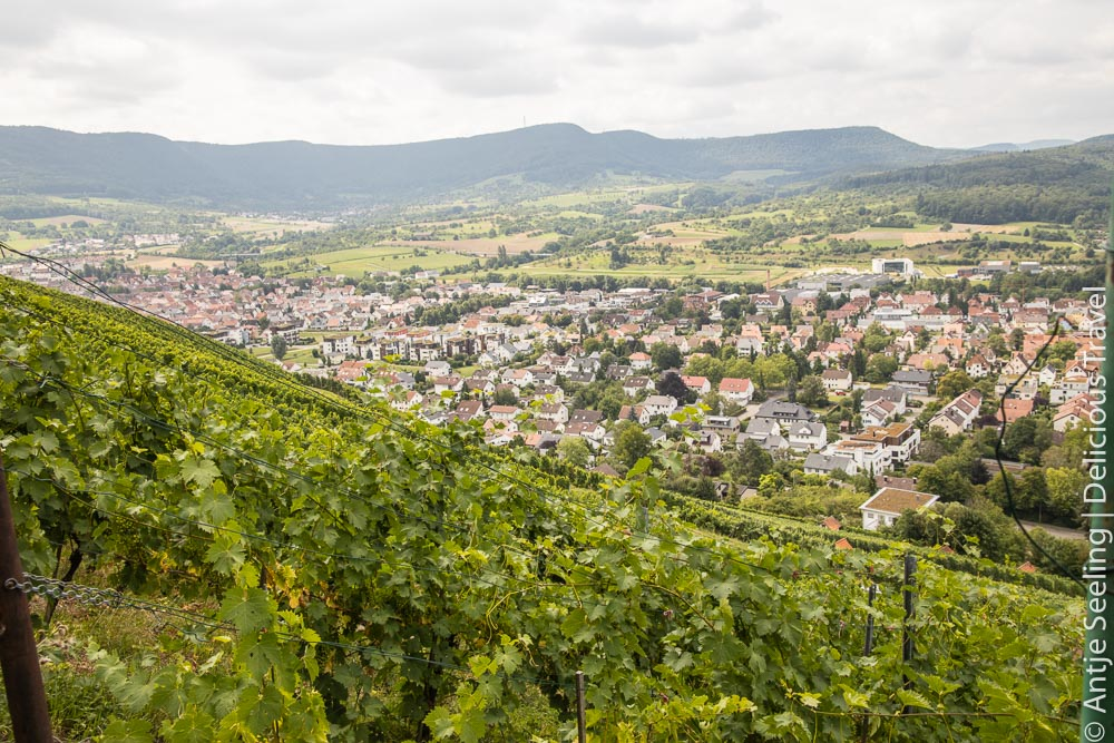 Metzinger Weinberge mit Blick auf die Schwäbische Alb