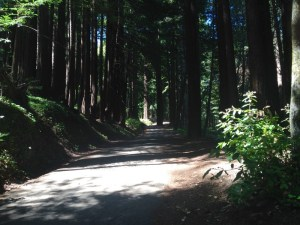 Bike path in Henry Cowell State Park, Santa Cruz