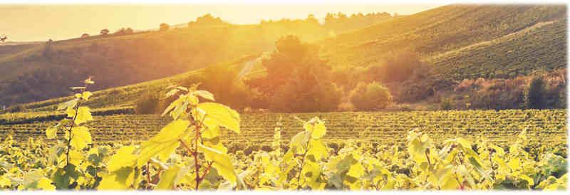 Maison-richardot-pere-et-fils-champagne-Terre