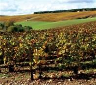 Richardot-champagne-terre